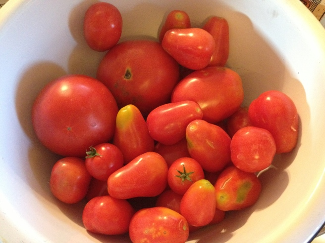 Yummy tomatoes picked from our garden